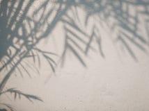 Drzewni liście ocieniają na ściennym tle, Abstrakcjonistyczny tło Cemen Obrazy Royalty Free