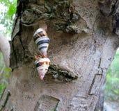 Drzewni ślimaczki Zdjęcia Stock