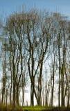 drzewni marzycielscy odbicia Fotografia Royalty Free
