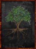 Drzewni nakreślenie koloru liście i korzeń na blackboard Obraz Royalty Free