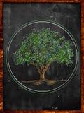 Drzewni nakreślenie koloru liście na blackboard Obraz Royalty Free