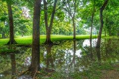Drzewni odbicia Fotografia Royalty Free