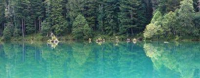 Drzewni odbicia w wodnym jeziorze Obraz Royalty Free