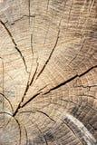 Drzewni okręgi Obrazy Royalty Free