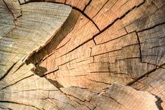 Drzewni okręgi Obrazy Stock