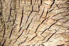 Drzewni okręgi Zdjęcie Stock