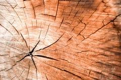 Drzewni okręgi Fotografia Stock