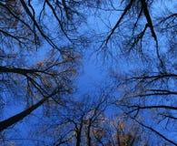 drzewni opóźneni spadek wierzchołki Zdjęcia Royalty Free