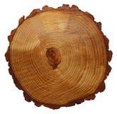 Drzewni pierścionki Obraz Royalty Free