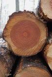 Drzewni pierścionki Zdjęcia Stock