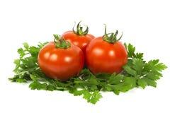Drzewni pomidory Obraz Stock