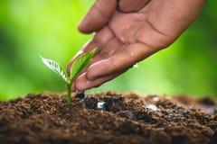 Drzewni przyrosta Trzy kroki W naturze I pięknym ranku oświetleniu Obraz Stock