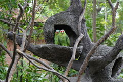 Drzewni ptaki Obrazy Stock