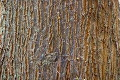 Drzewni tekstur tła Zdjęcia Royalty Free