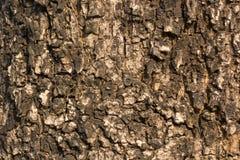 Drzewni tekstur tła Obrazy Stock