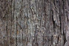 Drzewni tekstur tła Fotografia Royalty Free
