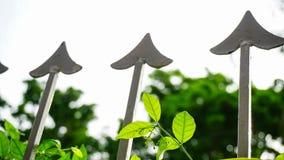 Drzewni trójzęby Obraz Stock