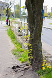Drzewni trzony Obraz Stock