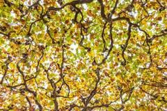 Drzewni wierzchołki Obrazy Stock