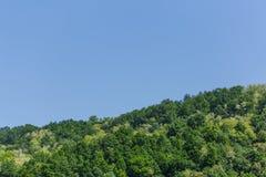 Drzewni wierzchołki mieszany las na słonecznym dniu pod niebieskim niebem Obrazy Royalty Free