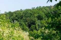 Drzewni wierzchołki mieszany las na słonecznym dniu pod niebieskim niebem Obraz Stock