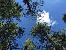 Drzewni wierzchołki Zdjęcia Royalty Free