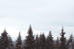 Drzewni wierzchołki Fotografia Stock