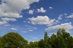 Drzewni wzgórza Zdjęcie Stock