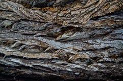 Drzewny łupy tło fotografia royalty free