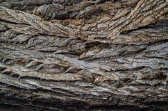 Drzewny łupy tło fotografia stock
