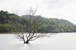 Drzewny śmierć stojak w morzu zdjęcie stock