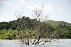 Drzewny śmierć stojak w morzu zdjęcie royalty free