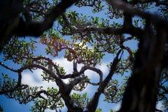 Drzewny śniadanio-lunch z liśćmi przeciw niebieskiemu niebu Obrazy Stock