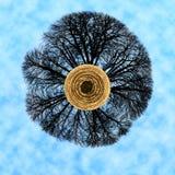 Drzewny świat Zdjęcia Royalty Free