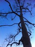 Drzewny abstrakt Obraz Stock