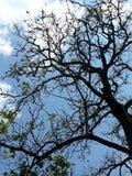 Drzewny arcydzieło w chmurze & niebie obraz stock