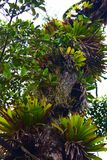 Drzewny arvore natury natureza terra zdjęcia royalty free