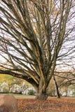 Drzewny autum Fotografia Royalty Free