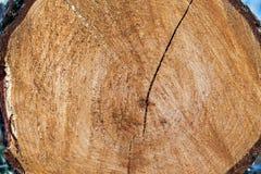 Drzewny bagażnik fotografia stock