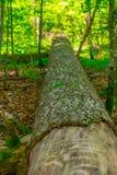 Drzewny bagażnik zdjęcie royalty free