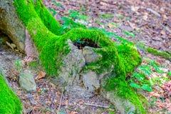 Drzewny bagażnik zdjęcia stock