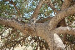 Drzewny bagażnik obraz royalty free