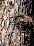 Drzewny bagażnik doceniać teksturę drzewo obrazy royalty free