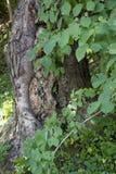 Drzewny bagażnik obramiający liśćmi obraz royalty free