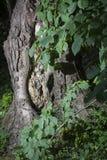 Drzewny bagażnik obramiający liśćmi zdjęcia royalty free