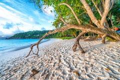 Drzewny bagażnik przy zmierzchem na pięknej tropikalnej plaży Zdjęcie Royalty Free