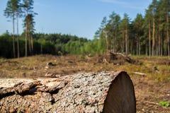 Drzewny bagażnik w lesie obraz royalty free