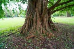 drzewny bagażnik w parku zdjęcie stock