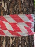 drzewny bagażnik z barykady taśmą obrazy stock