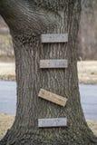 Drzewny bagażnik z deskami dla wspinać się Obraz Royalty Free